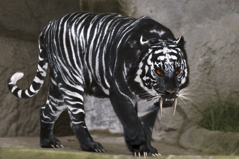 Which is your favorite wild animal  Black Tigers Animal