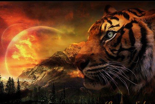 black tiger animal - photo #28
