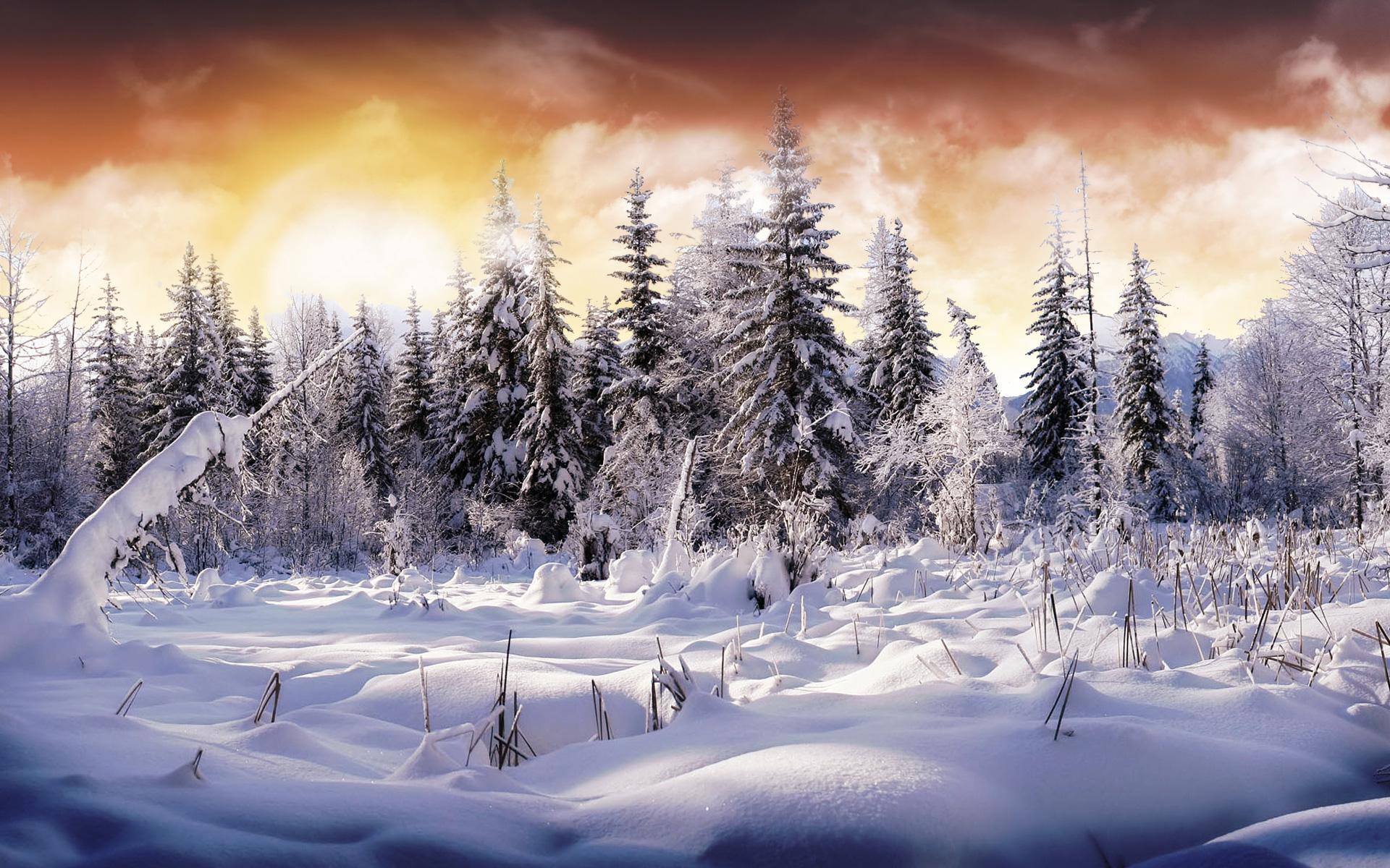 Winter Season: Best Download 2